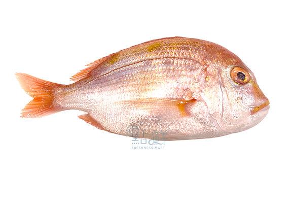 波立魚 (斤)