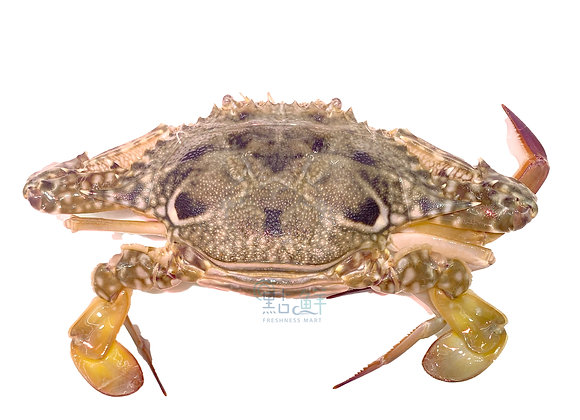 藍花蟹乸  (斤)