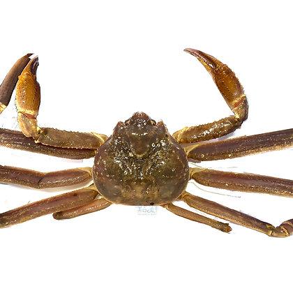 松葉蟹(1斤/ 1catty)
