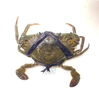 膏蟹(1隻 / 1pc)