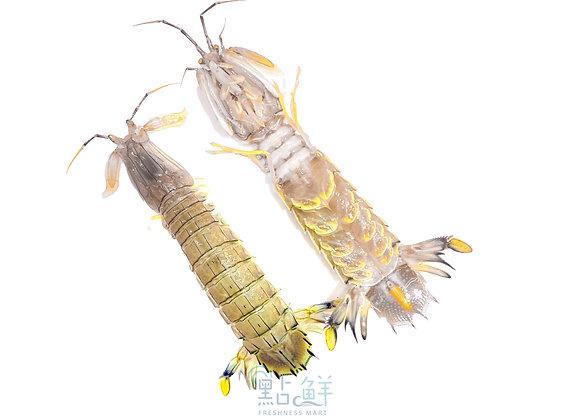 瀨尿蝦 (斤)
