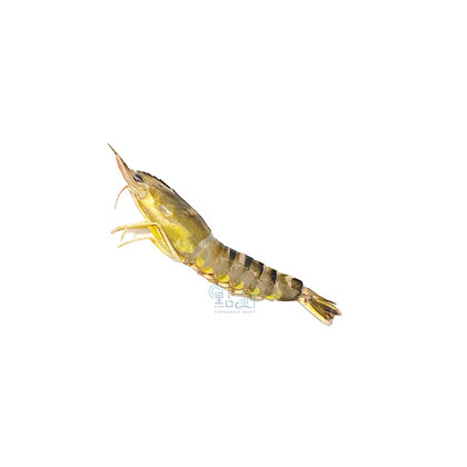 九節蝦(半斤/ 0.5catty)