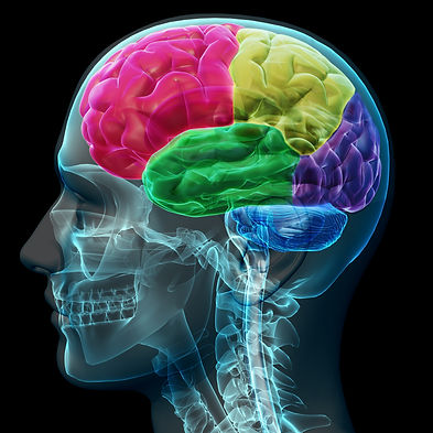 brain-coloed-sections-PWD3VK6.jpg