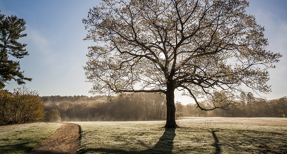 tree cover.jpg