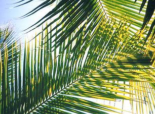 588-palm-sunday.jpg
