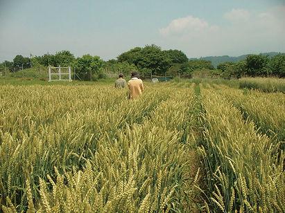仕入先:猿吉さんの小麦畑