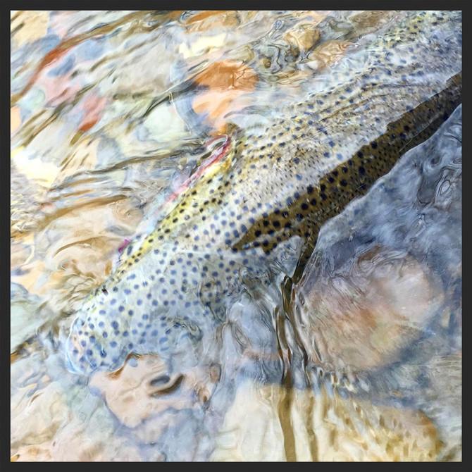 Chagrin River Riffles - OHIO