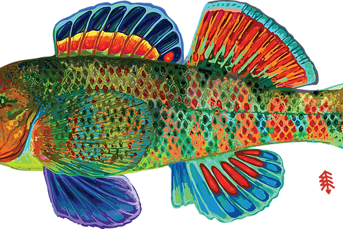 Rainbow Darter - Digital Print