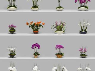 Signature Orchids