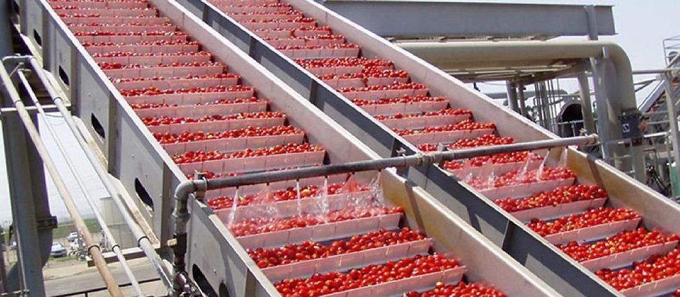vegetable-conveyor.jpg