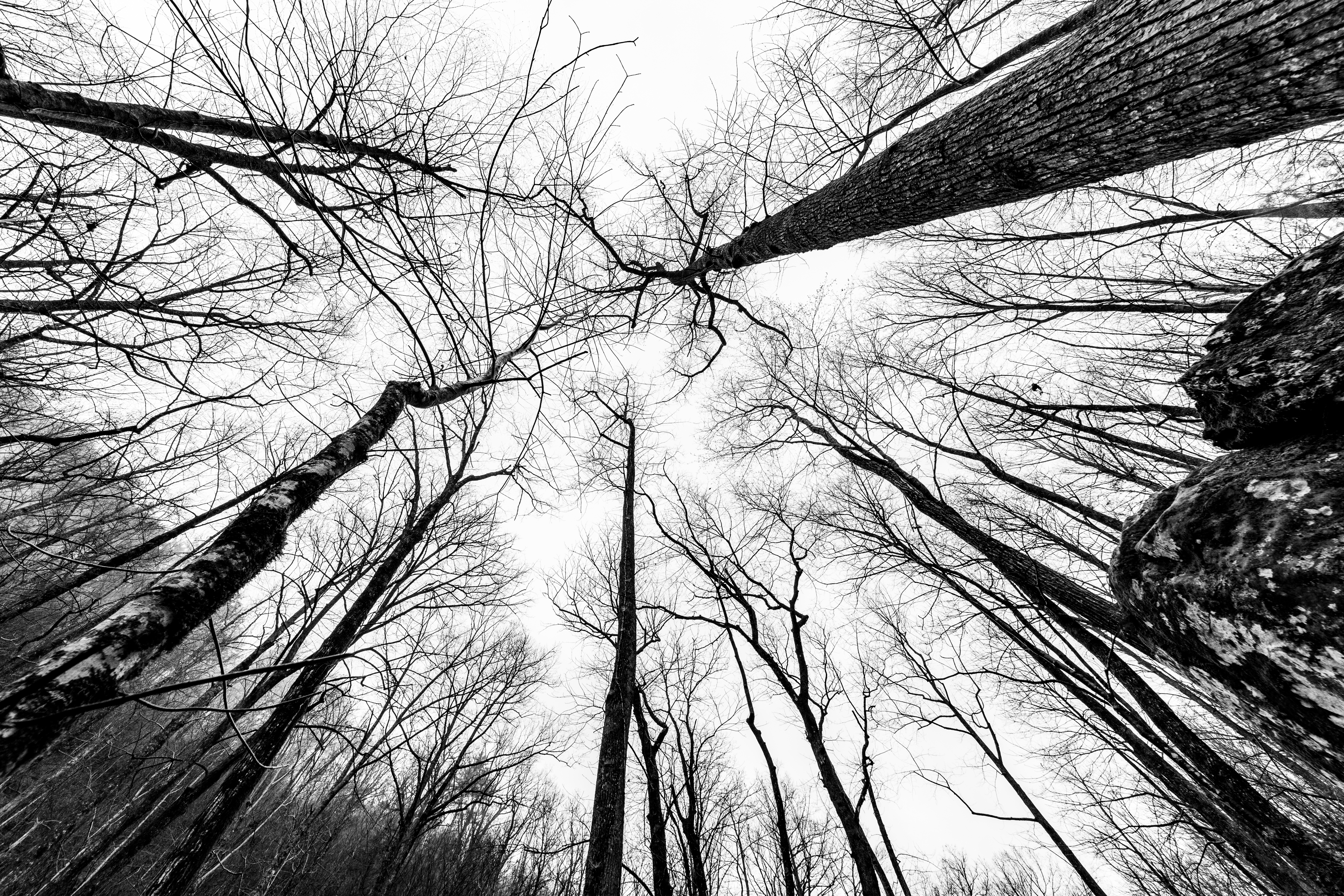 Trees black and white\