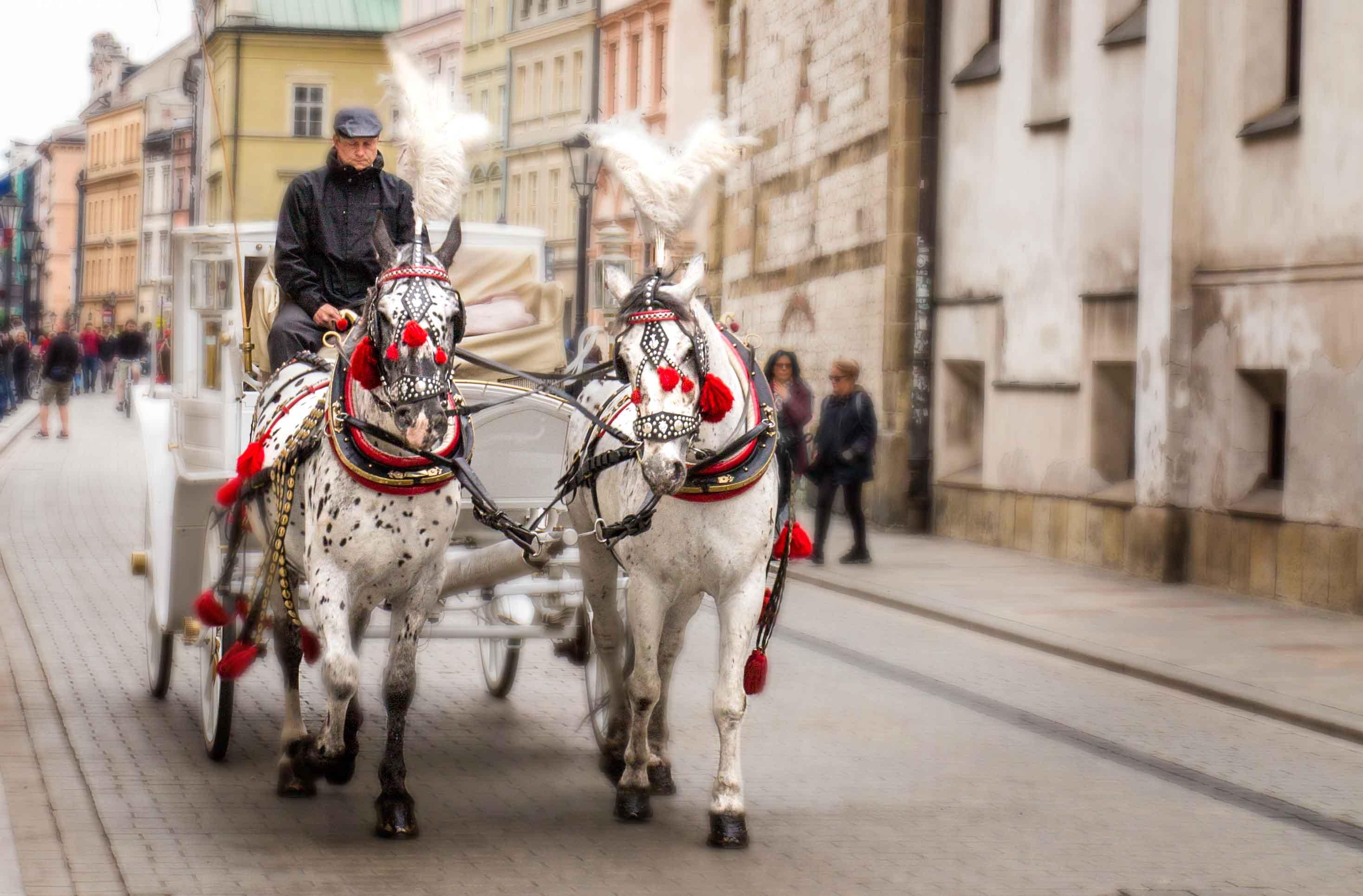 Horse drawn carriage Krakow