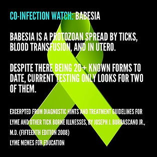 babesia testing look for 2.jpg
