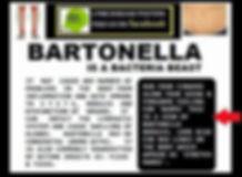 bartonella fact sheet.jpg