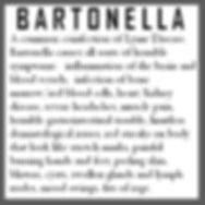 bartonella paragraph.jpg