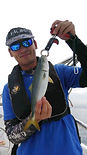yellowtail_sm_edited.jpg