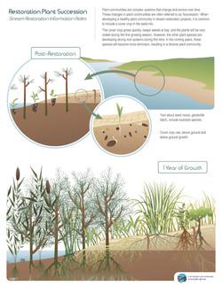 Plant Succession Sheet