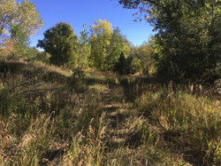 Foot trail through Bosque habitat