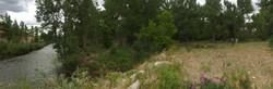 Bosque habitat along Purgatoire