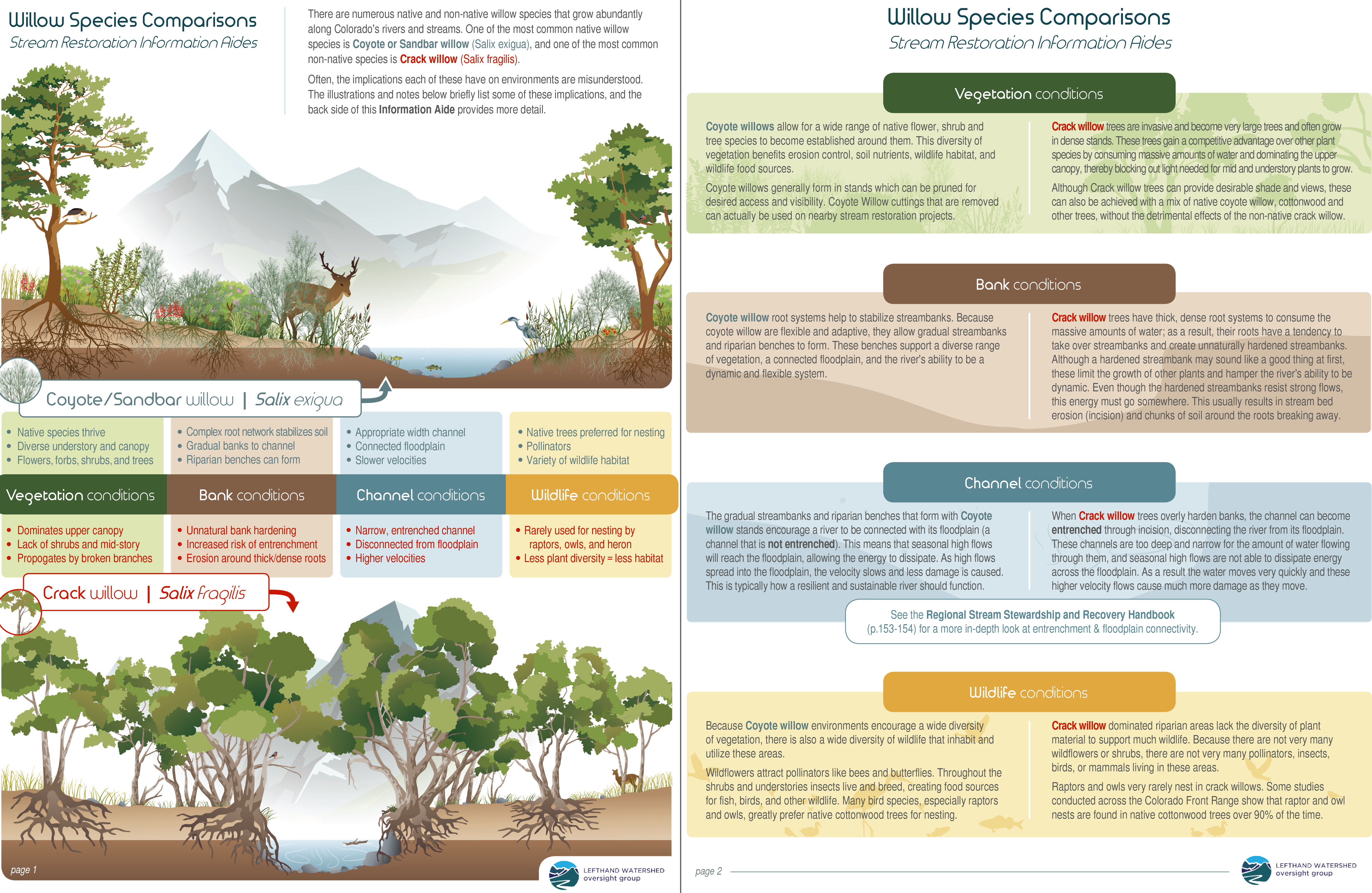 Willow Species Comparison Sheet (front and back)