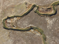 Meanders within Pilot Project area