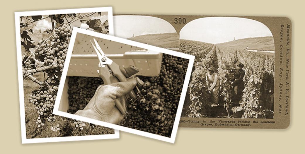 vineyard cover .png