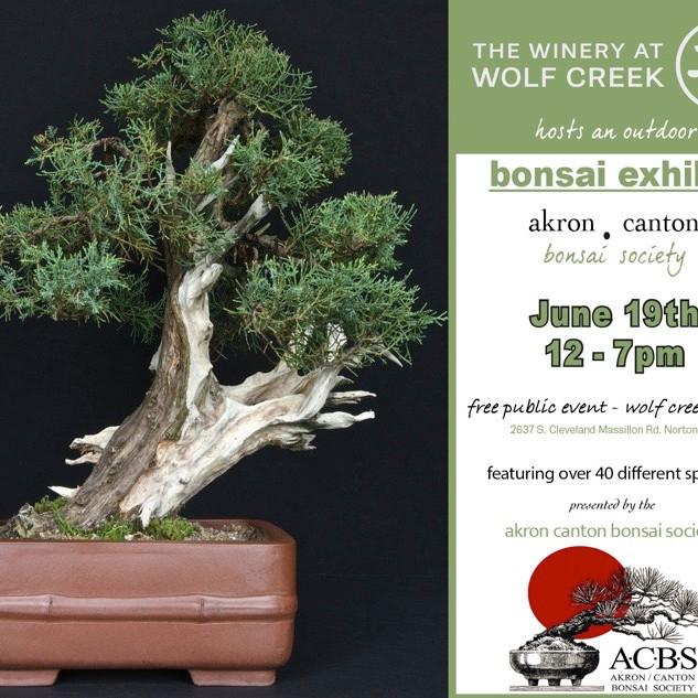 Bonsai Exhibit