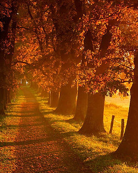 Autumn-Landscape-Scenery.jpg