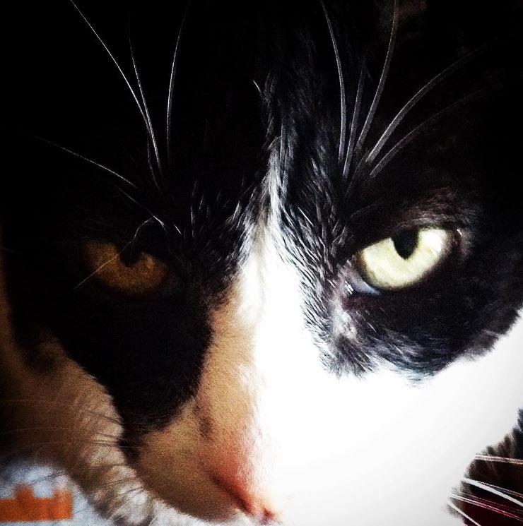 a cara do gato