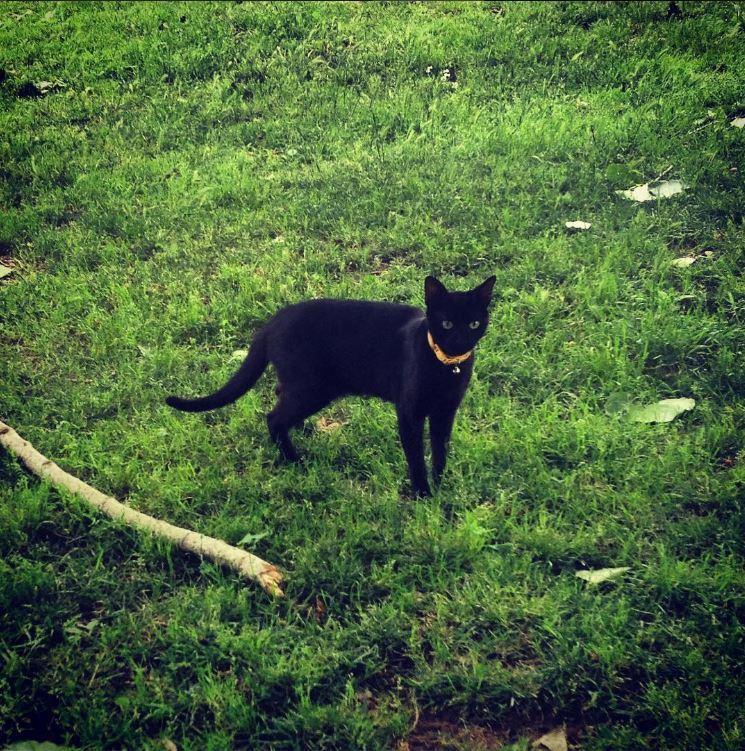 gato no prado