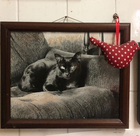 O gato de todos os gatos.