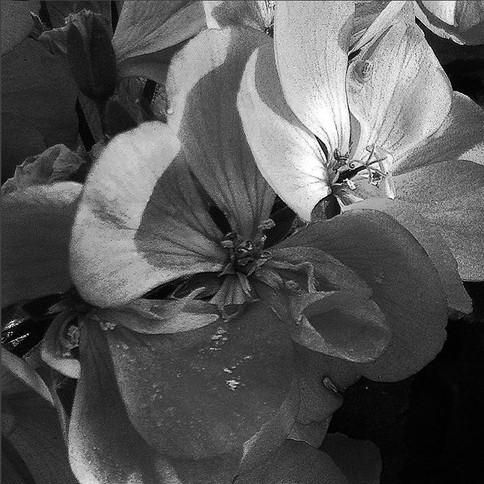 a flor que eu plantei