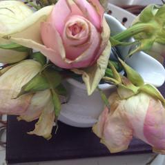Rosas desmaiadas