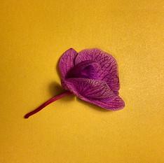 Flor do Pedro
