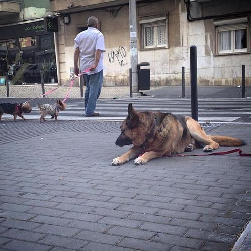 Outro cão