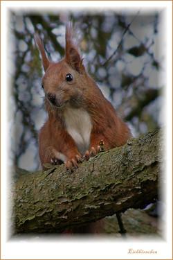 Eichhörnchen-Postbruch