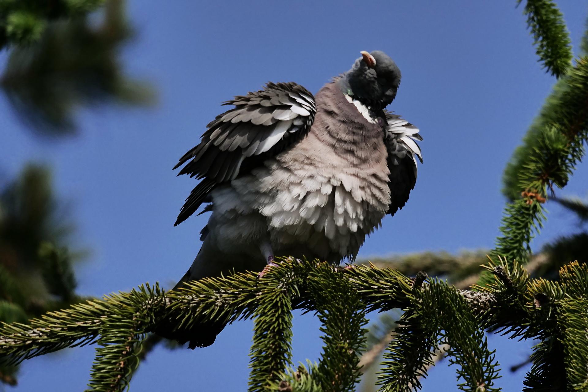 099Vögel