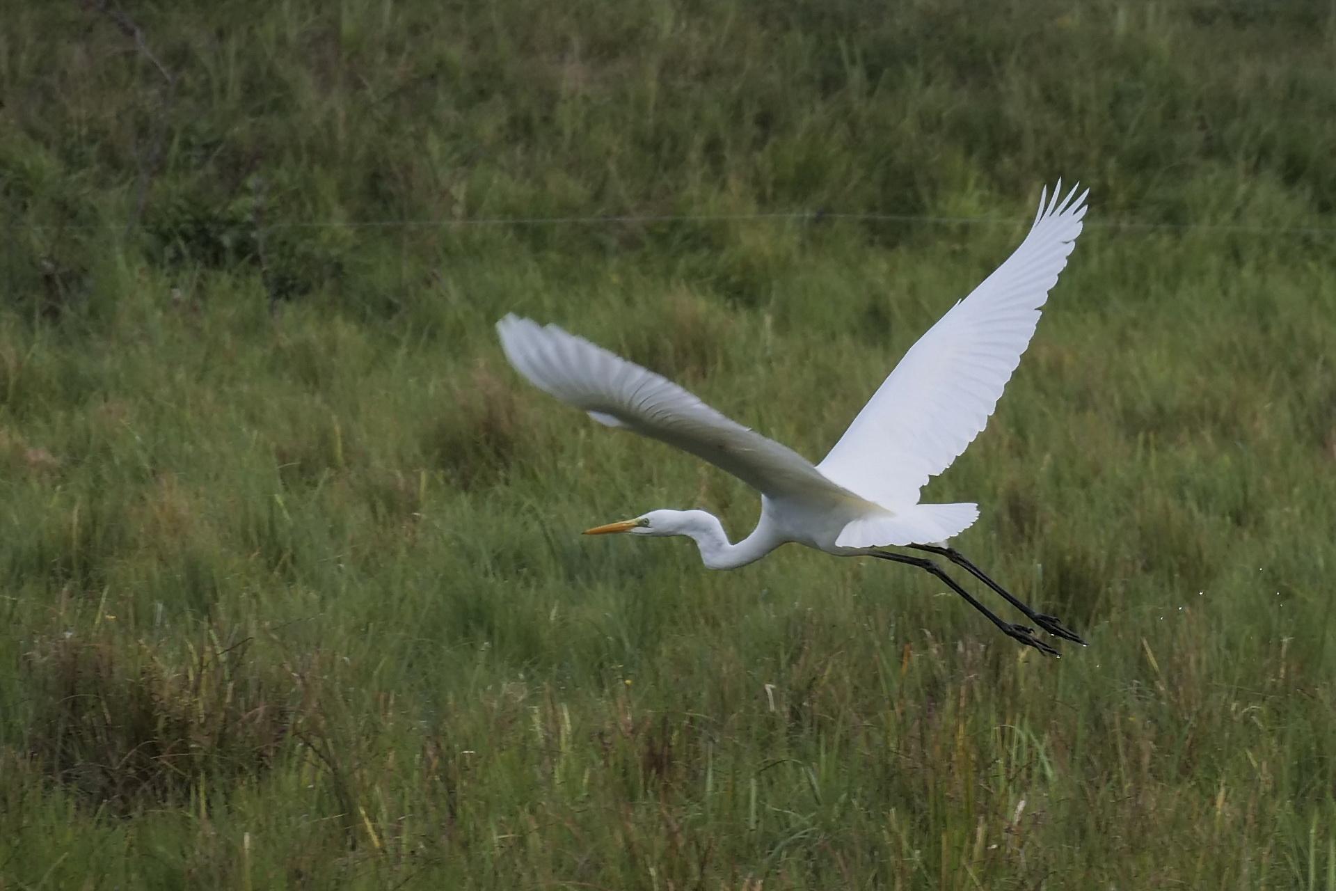 085Vögel
