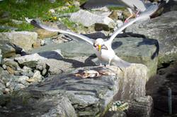 020Vögel