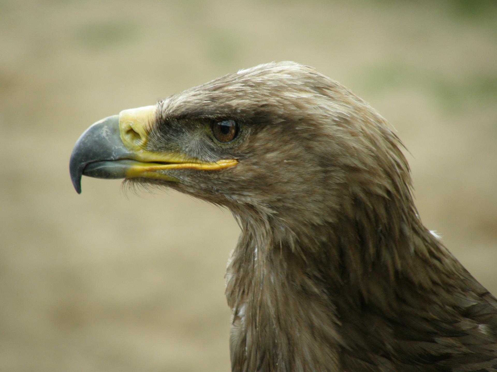 014Vögel