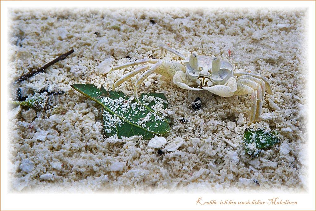 Krabbe-Malediven