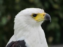 028Vögel