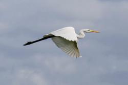 086Vögel