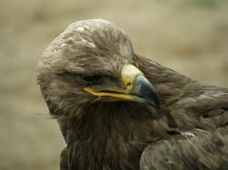 013Vögel