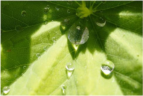sonne-und-regen-vereint.jpg