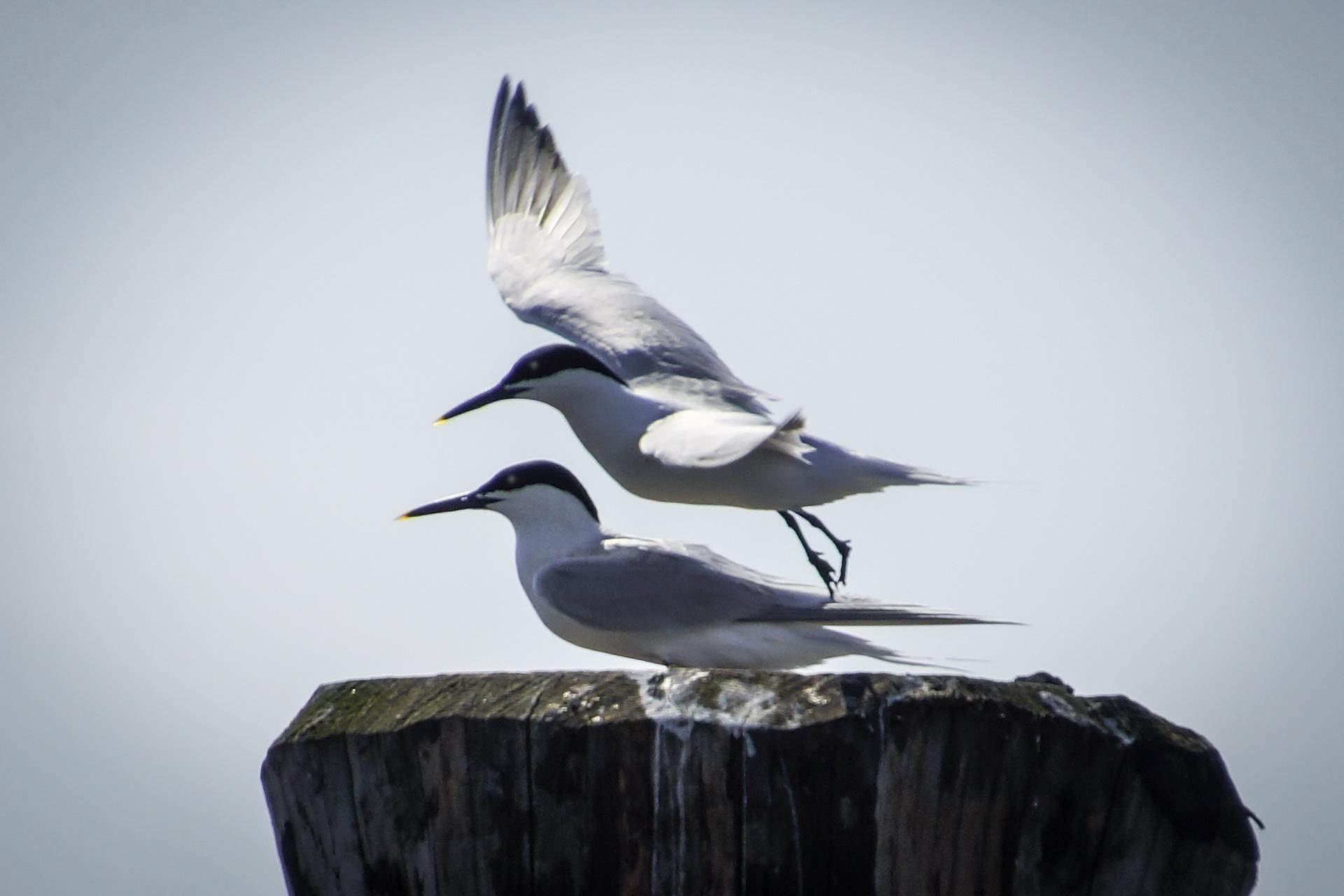 082Vögel