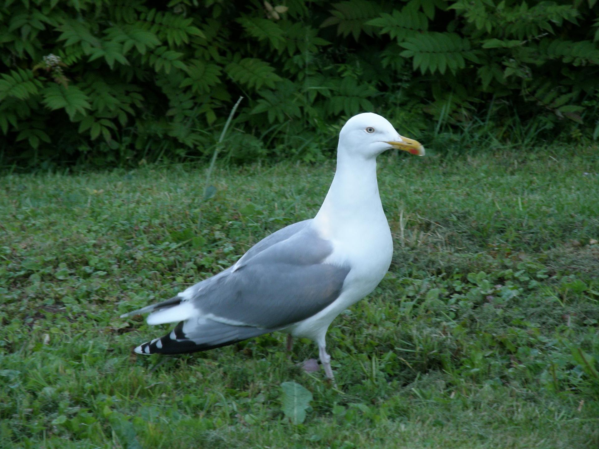 009Vögel