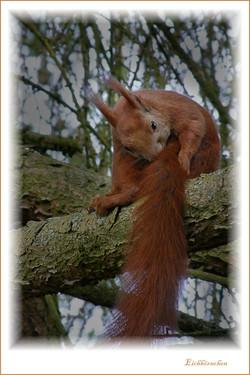 3005-Eichhörnchen-Postbruch.jpg