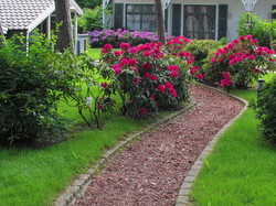 14_marotz_310_rododendron.jpg
