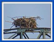 das Nest vom vorigen Jahr